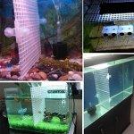 STARE89Grille intercalaire Plateau Cage pour Filtre d'aquarium en Bas d'Isoler–Couleur: Transparent, Blanc, Noir