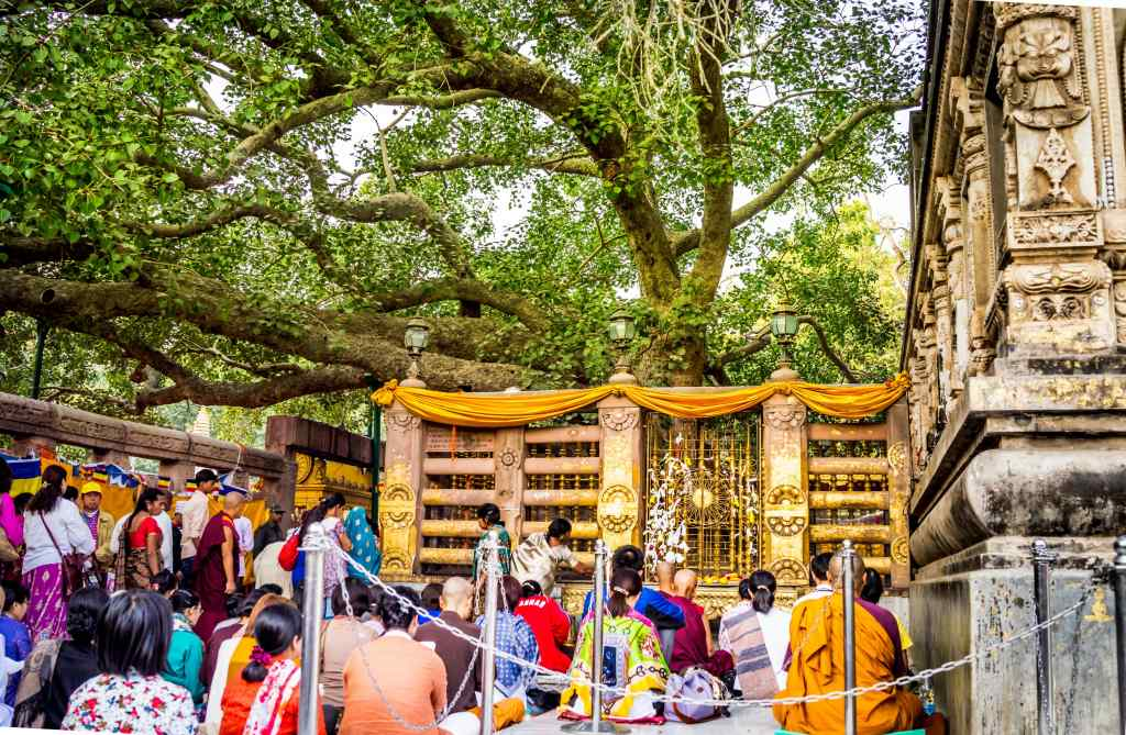 The MahaBodhi tree, the center of prayers at Bodh Gaya Photo Credit: NatureNation via Compfight cc