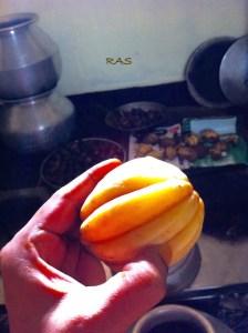 Gambooge | Fish Tamarind ripe fruit