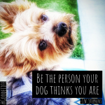 Be the person your dog thinks you are.- J. W. Stephens