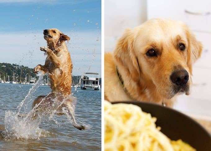 Dozer the RecipeTin Official Dog making a splash