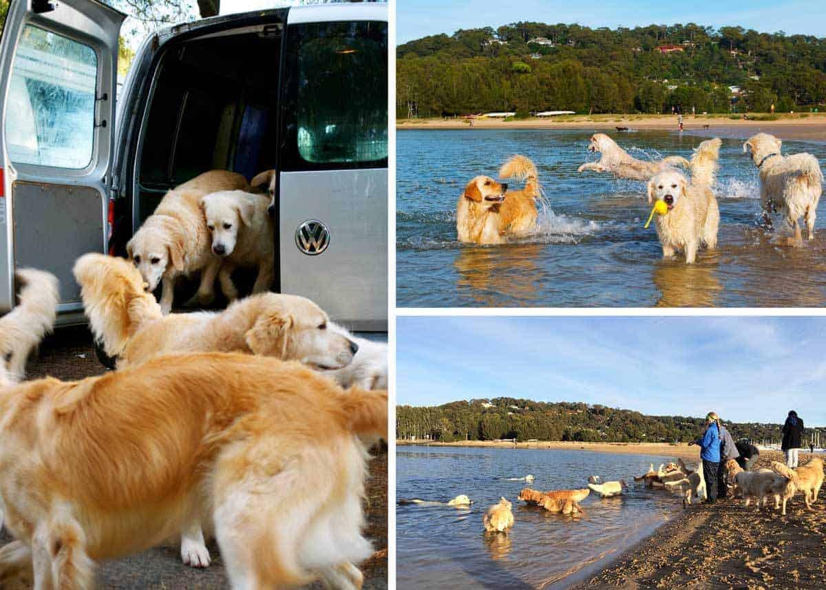 Dozer-bayview-with-Carolyn-dogs