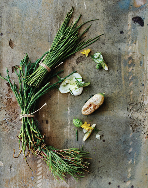 Image of cucumber roasted in madrone dill coastal grasses