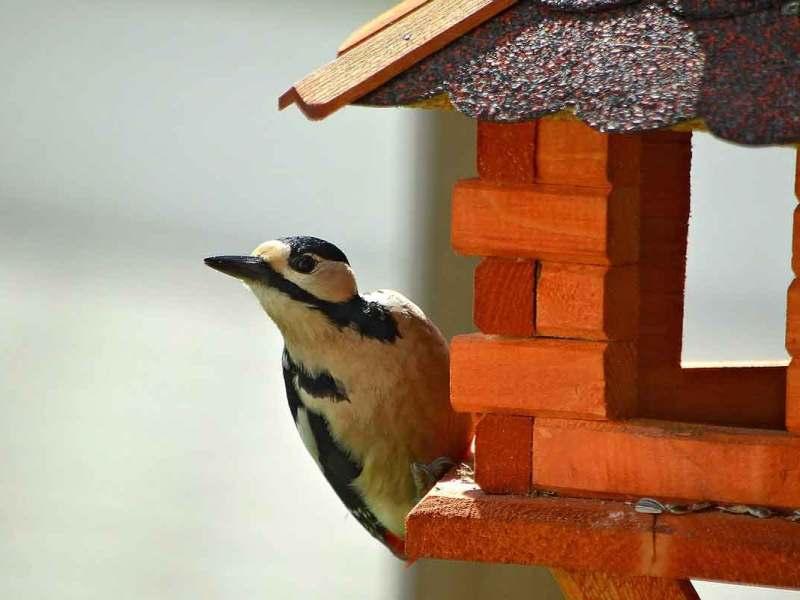 ¿Sabes qué es una cláusula suelo o eres un pájaro carpintero?