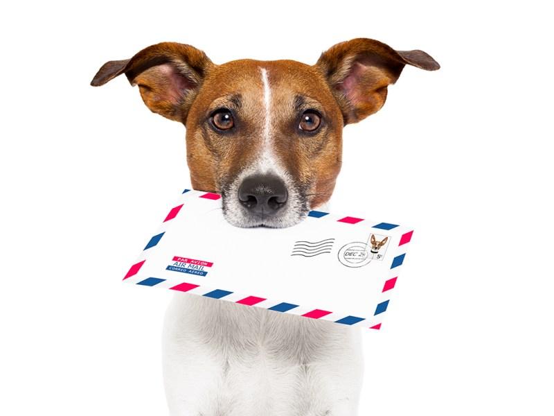 Seguimos defendiendo los derechos de las mascotas en los vuelos