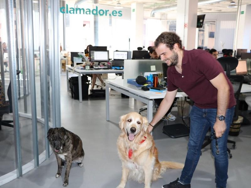 Día Mundial de llevar el perro al trabajo en reclamador.es