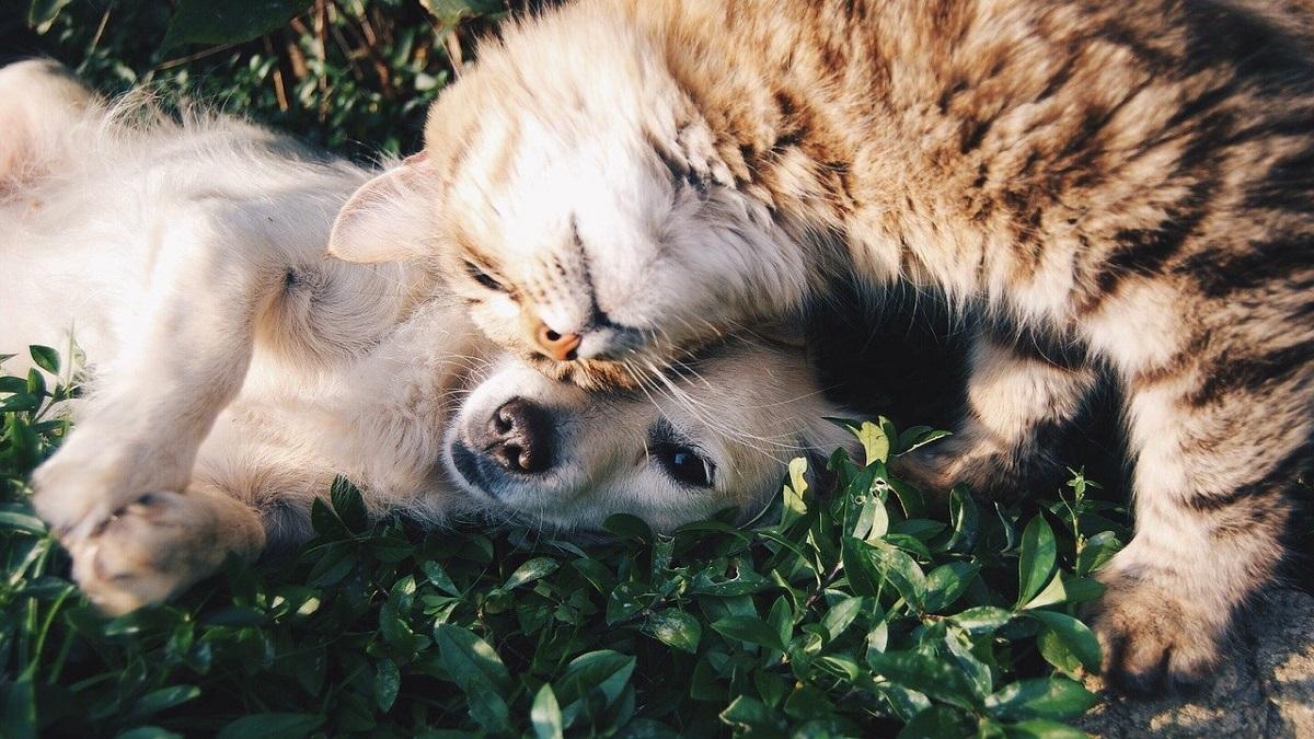 custodia perros y gatos  divorcio