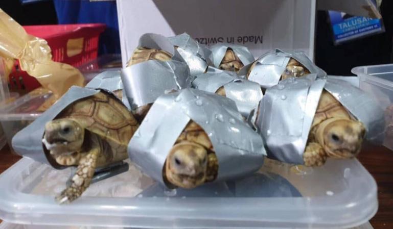 Policía filipina encuentra tortugas en un aeropuerto