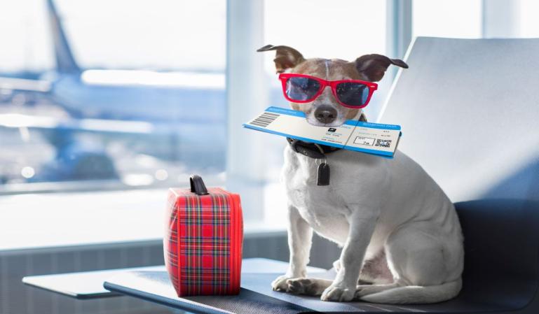 Cómo viajar en avión con mascotas