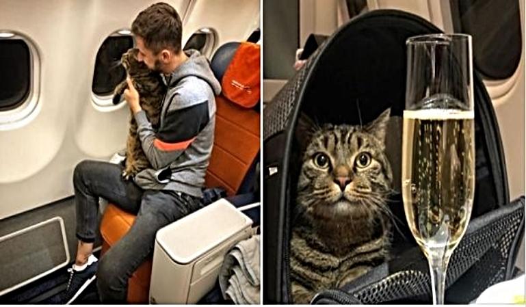 Un pasajero logra colar a su gato en cabina