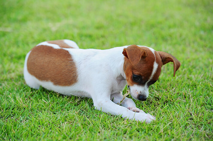The Facts You Need to Know About Giardia in Dogs