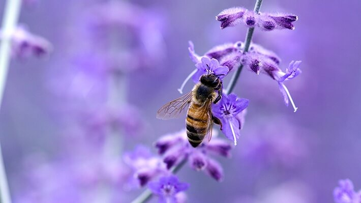 Attracting More Bees to Your Garden