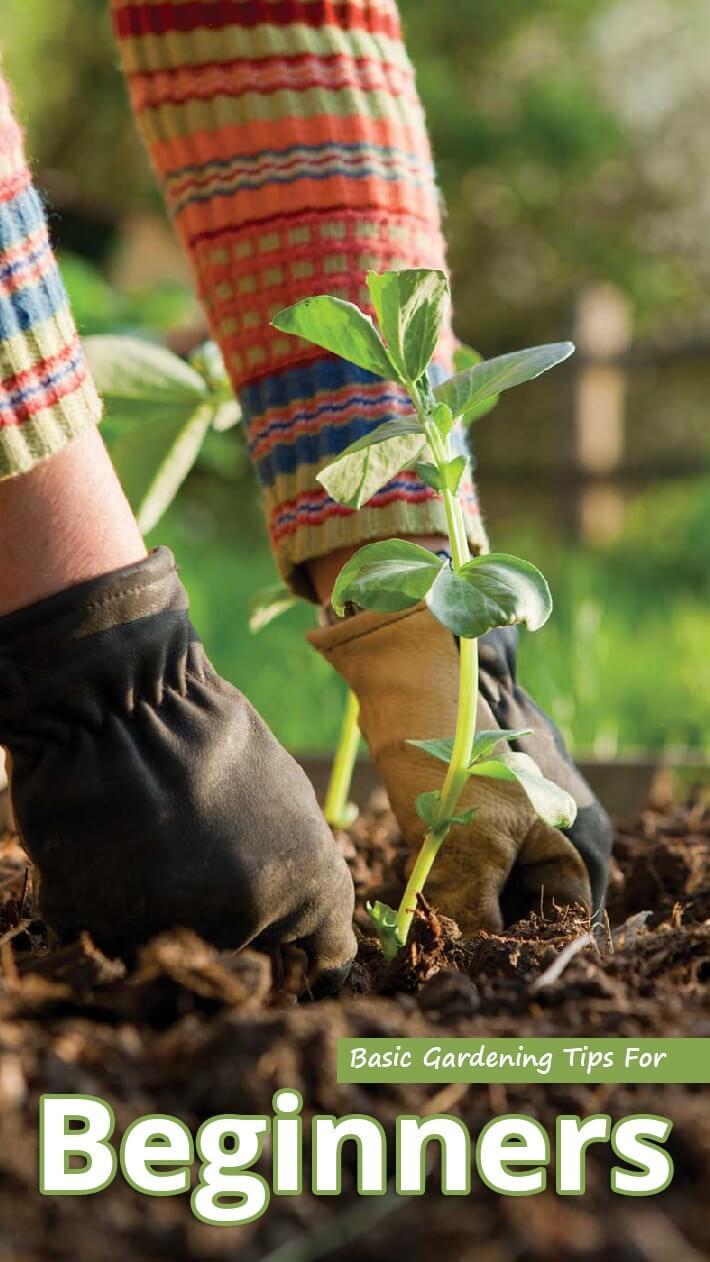 Recommended TipsBasic Gardening Tips For Beginners Recommended Tips