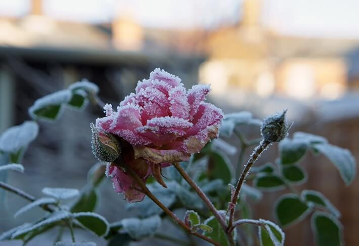 Keep An Eye Out For Last Minute Frost