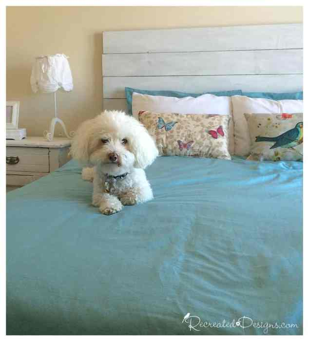 Mugsy the dog sitting on a Master Bedroom bed with a DIY headboard