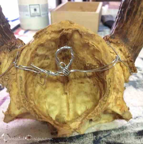 attaching a wire to antlers so that they can be hung on a wall