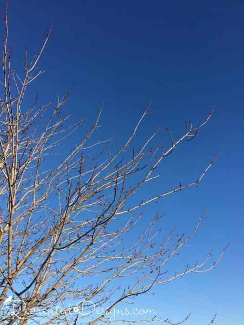 Clear blue winter sky