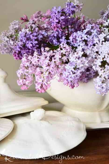 lilac blooms and Ironstone