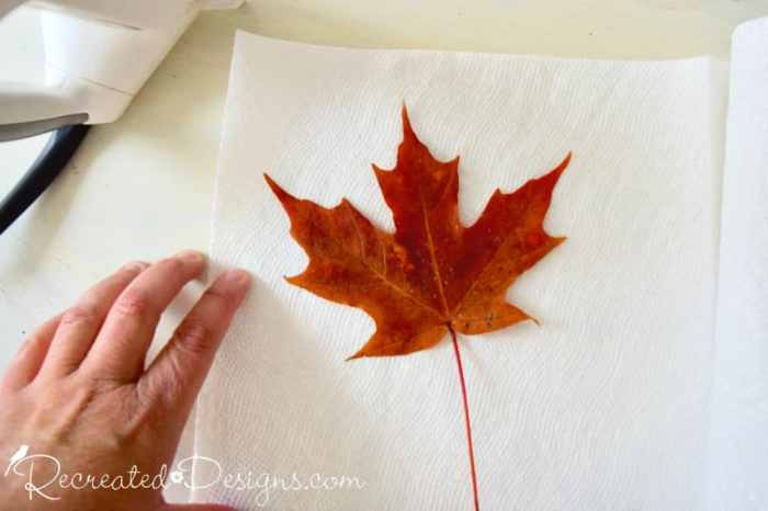 ironing Maple Leaves to remove the moisture