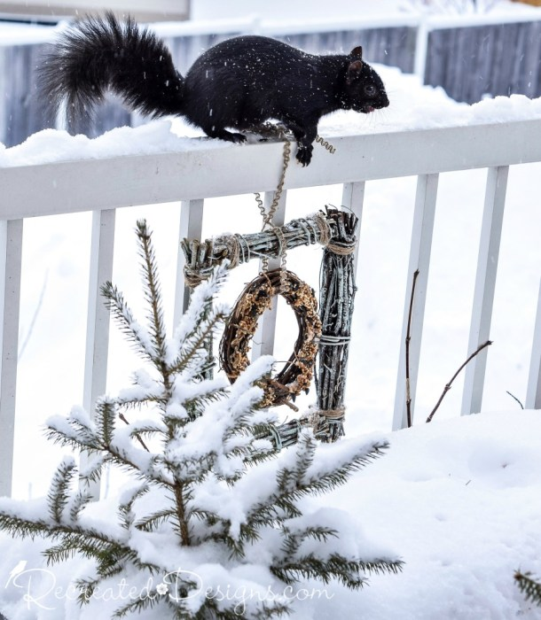a squirrel trying to get to the bird feeder