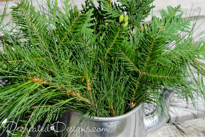 variety of evergreen in vintage tin pot