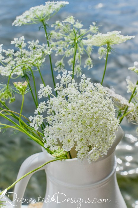 Queen Anne's Lace in pitcher