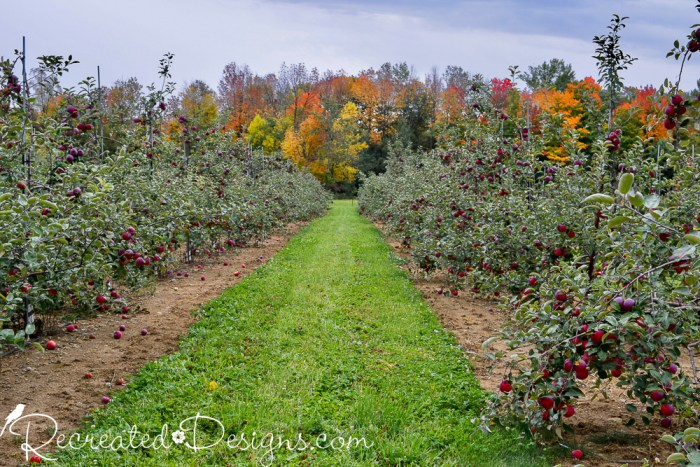 apple trees and beautiful fall leaves