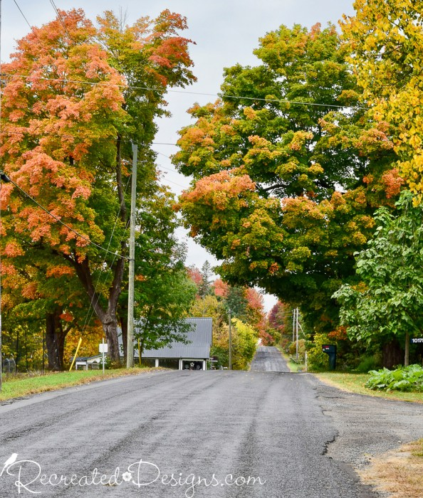 beautiful fall leaves in rural Ontario