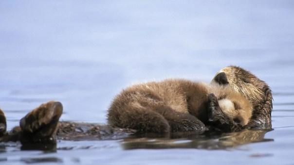 madre nutria con su bebé