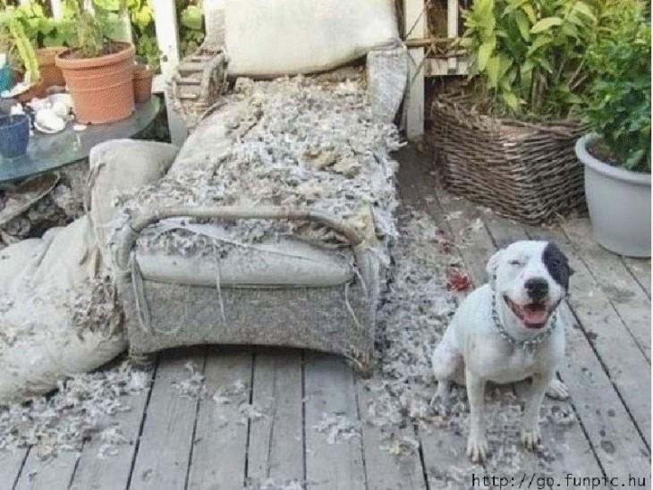 Perro sentado a un lado de un sillón roto