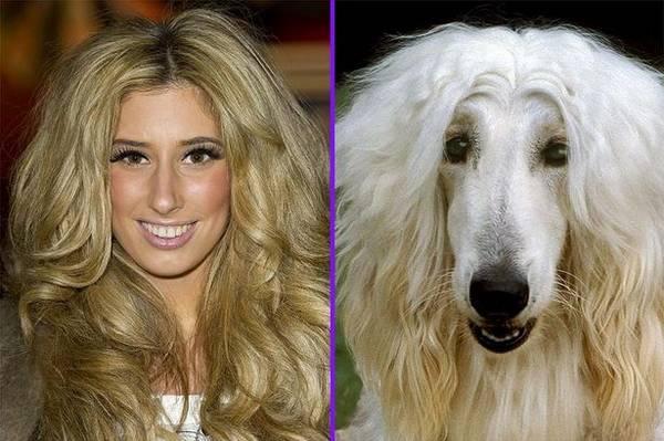 Perros que se parecen o son idnticos a sus dueos