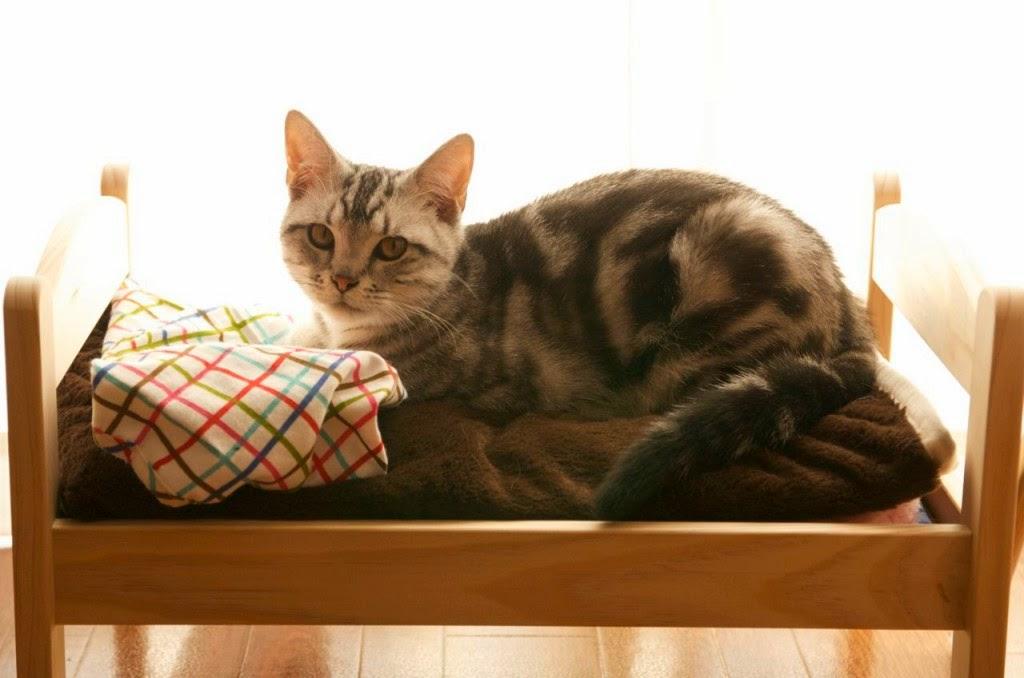 Japoneses Transforman Camas De Muecas En Camas Para Gatos