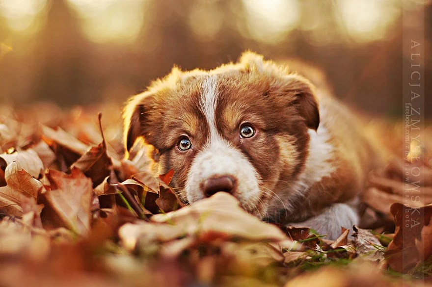 Cute Dog Background Wallpaper Bella Sesi 243 N De Fotos Con Perros Como Modelos