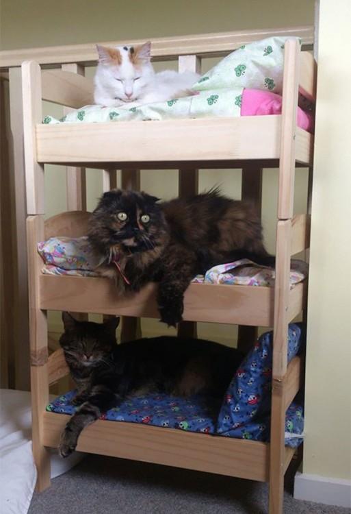 Japoneses Transforman Camas De Mu 241 Ecas En Camas Para Gatos