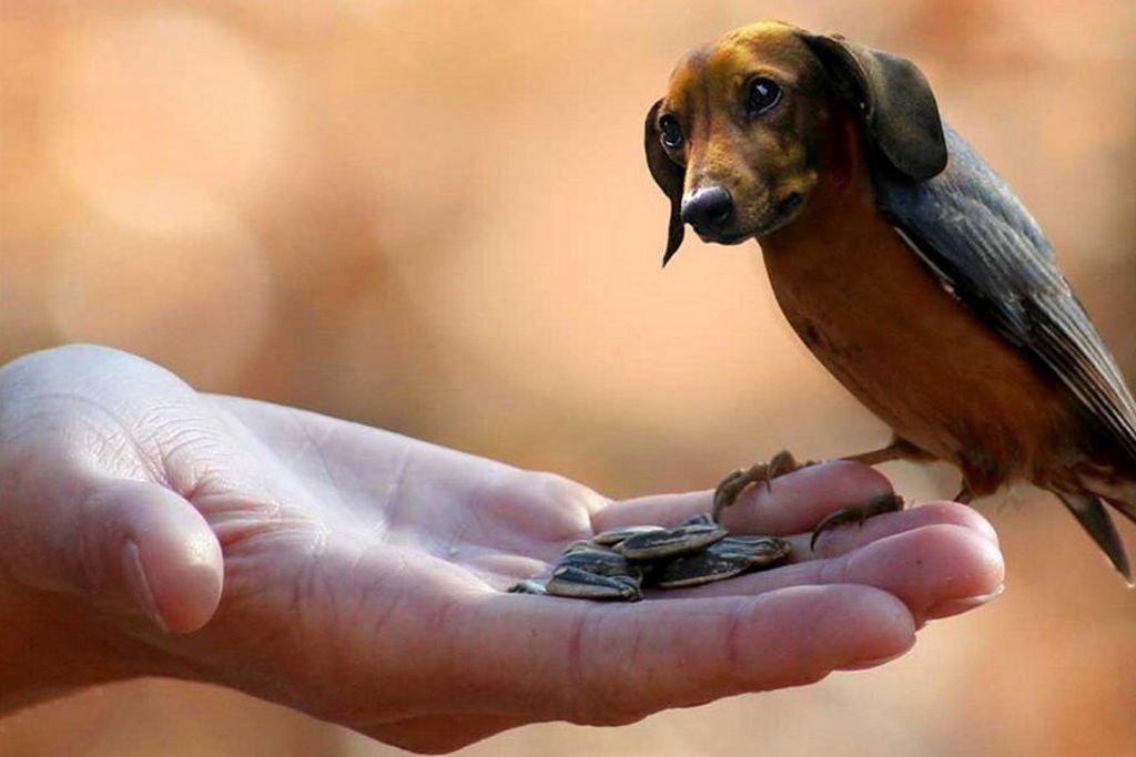 Como se ven distintas aves pjaros con cabeza de perros
