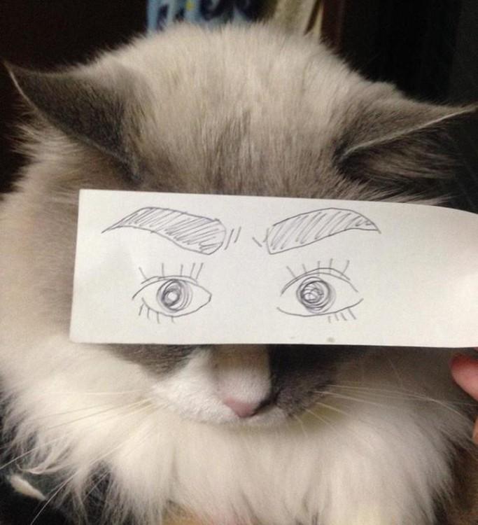 chistosas fotos de mascotas con ojos dibujados