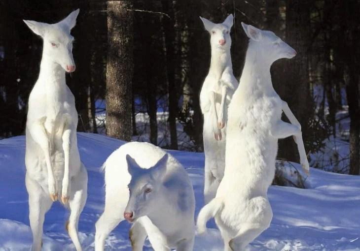 ciervos blancos en el bosque