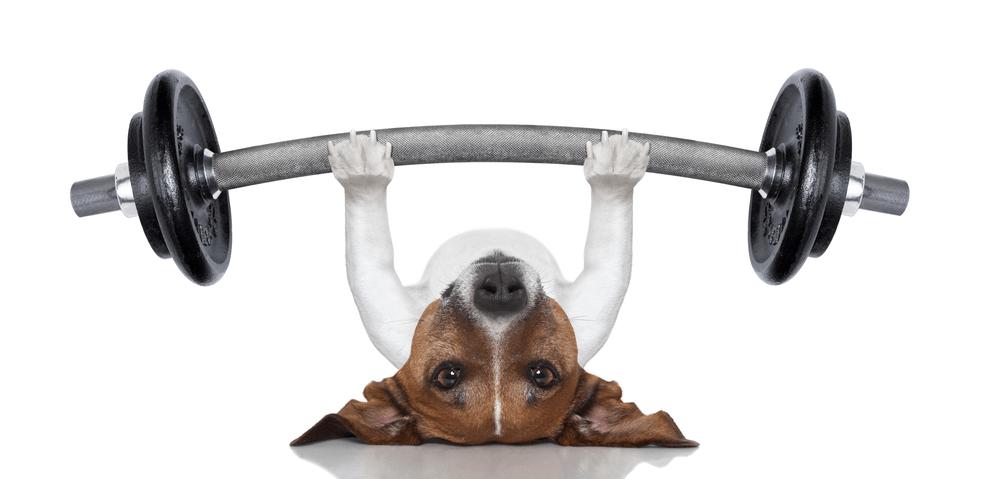 25 Perros que no necesitan a los humanos