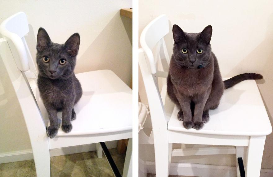 30 fotos antes y despus del crecimiento de un gato