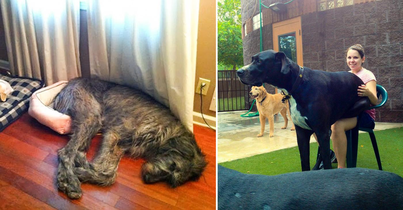 13 Problemas un dueo de un perro grande tiene