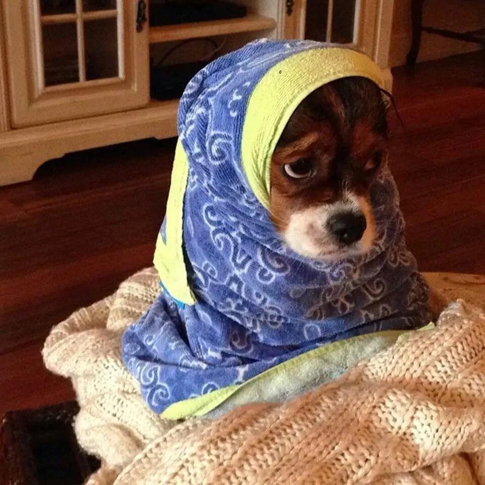 Razones por las que el bao es el mejor momento de un perro