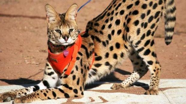 Lindos animales exticos que se pueden tener de mascotas
