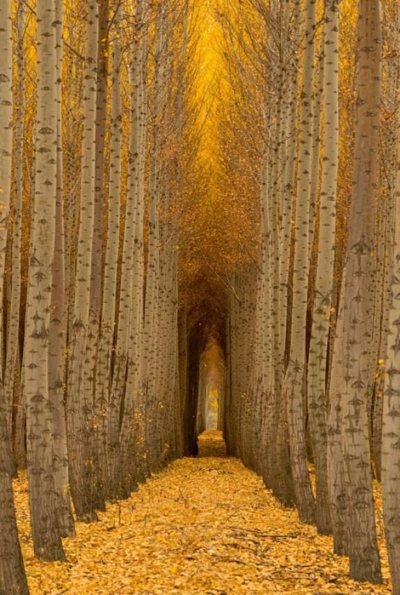 Camino en un bosque de Boardman en Estados Unidos de América