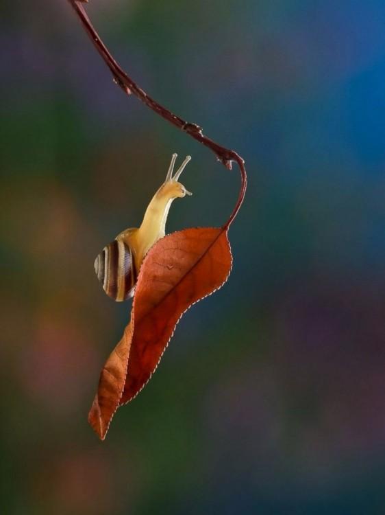 caracol colgado de una hoja de un arbol en otoño