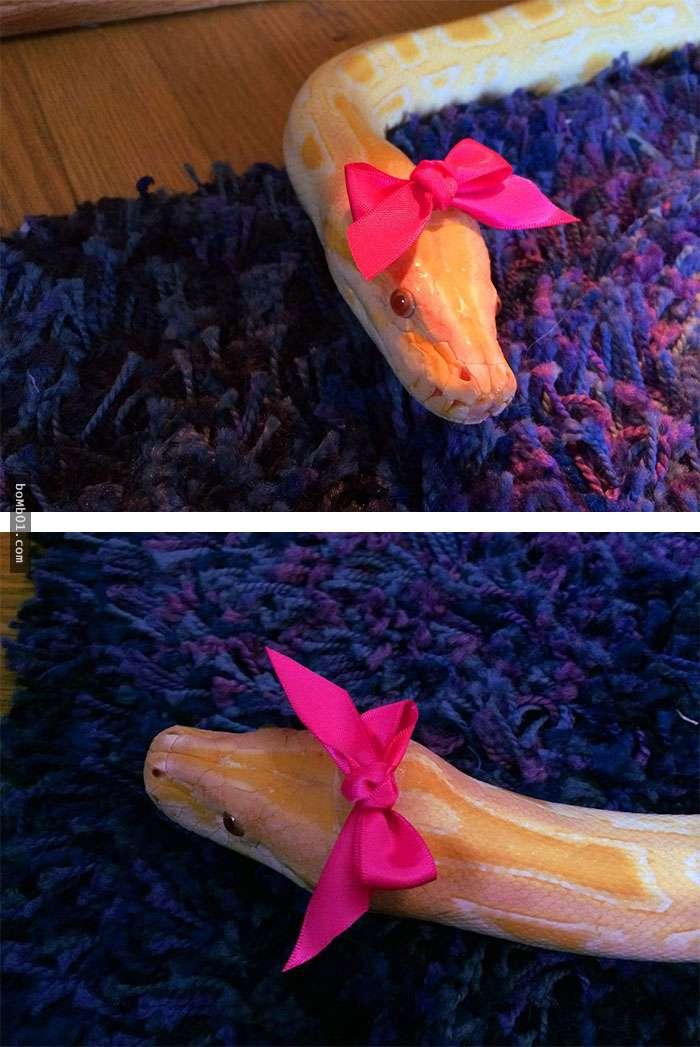 Le temes a las serpientes Slo necesitan un sombrero