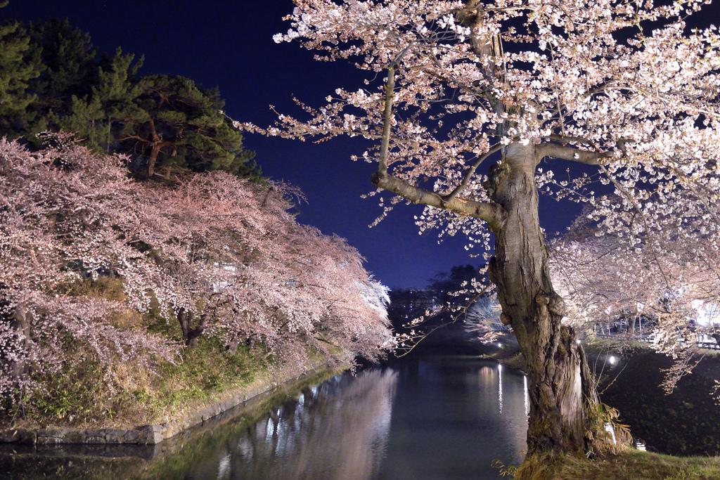 Festival Hanami en Japn celebracin del florecimiento Sakura