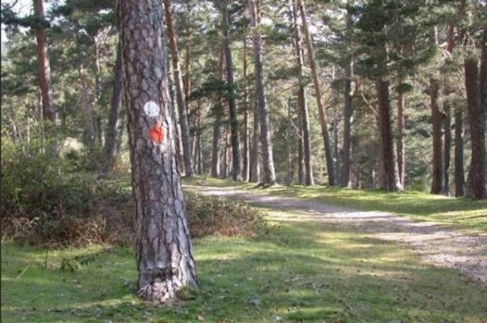 árvores da floresta de uma marcada