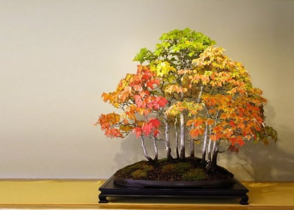 BONSAI CON FORMA DE BOSQUE