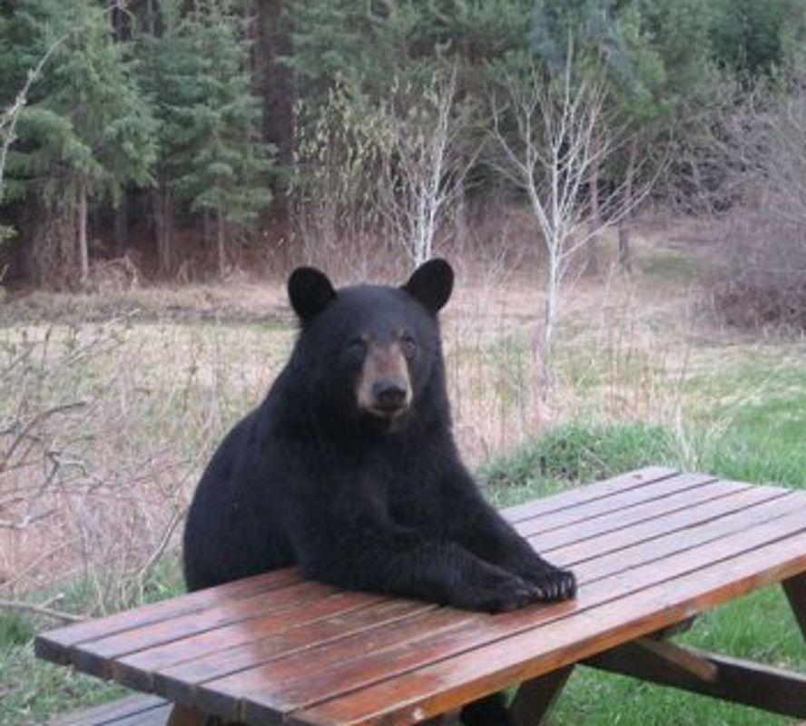 30 fotografas de osos haciendo cosas de humanos