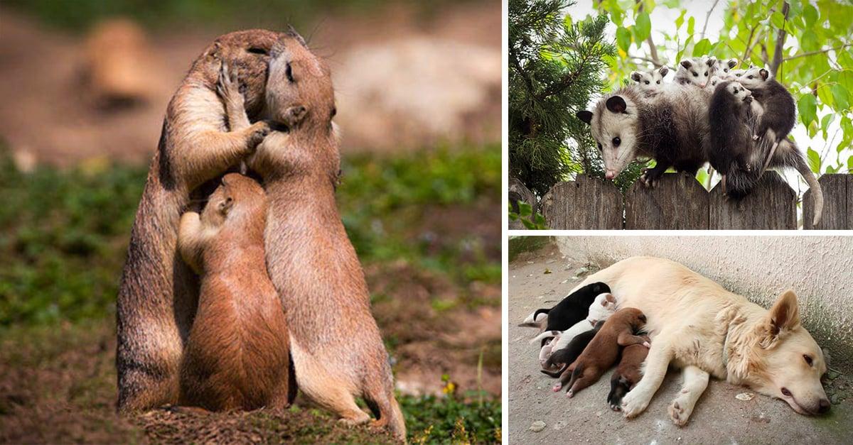 Animales cuyas expresiones resumen lo que es la maternidad